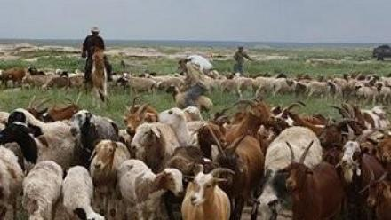 Still from Khangai Herds